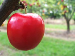 Červené líčka ako dve zdravé, krásne jabĺčka?