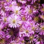 Kvety, z ktorých budete mať radosť