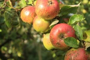 Chudnite s ovocím