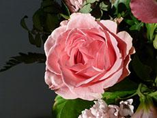 Ruža – kásna, voňavá a účinná