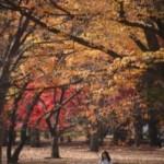 Končí leto, začína jeseň… Módne trendy pre jeseň