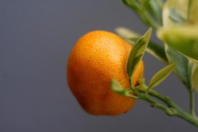 Ovocné delikatesy