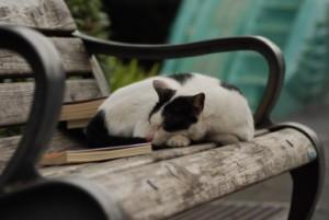 Neutíchajúca únava
