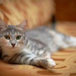 Komfort pri mačacej hygiene? Vaše zviera to ocení
