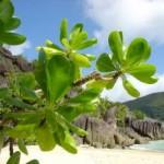 Seychely – raj na zemi