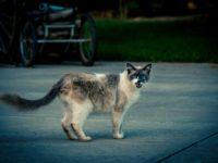 Zabudnite na túlavé mačky na vašom pozemku!